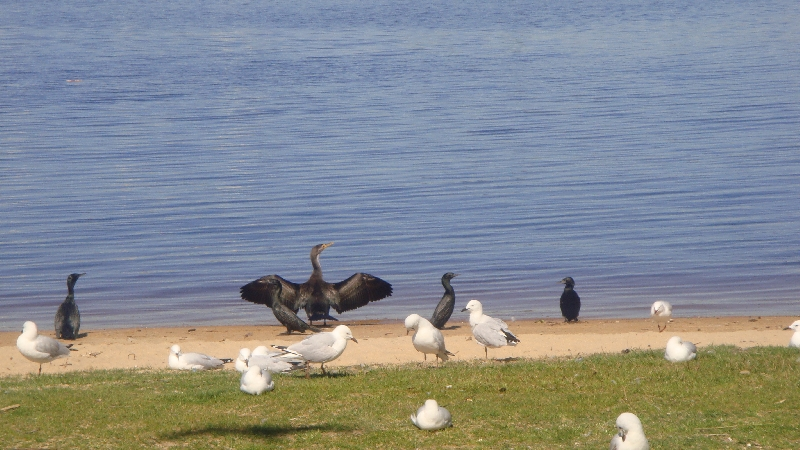 Birdies, Perth Australia