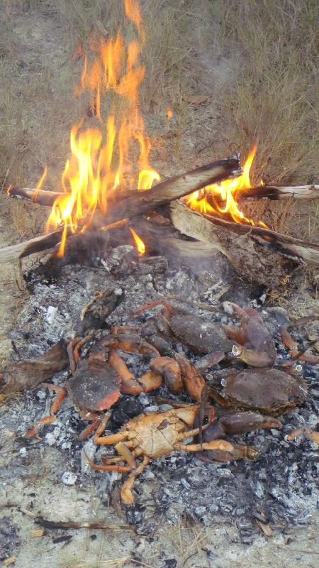 Mud crabs on the fire, Australia