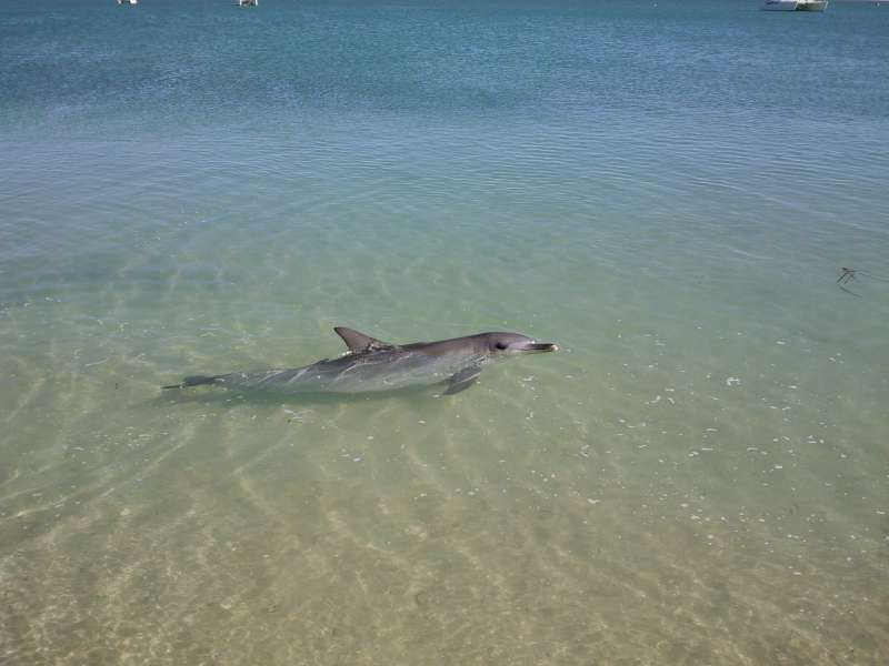 Dolphin at M.MIA, Monkey Mia Australia