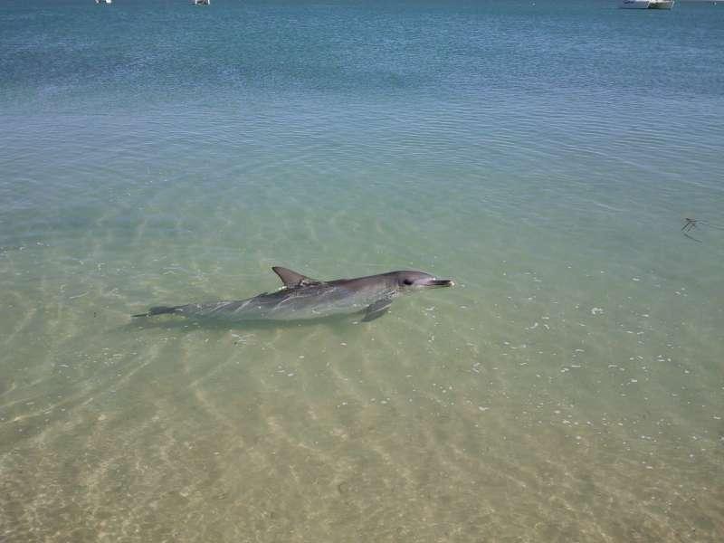 Dolphin at M.MIA, Australia