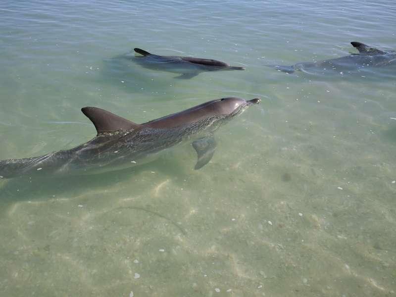 Feeding time, Australia