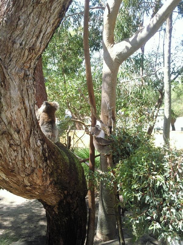 Yanchep National Park, Australia