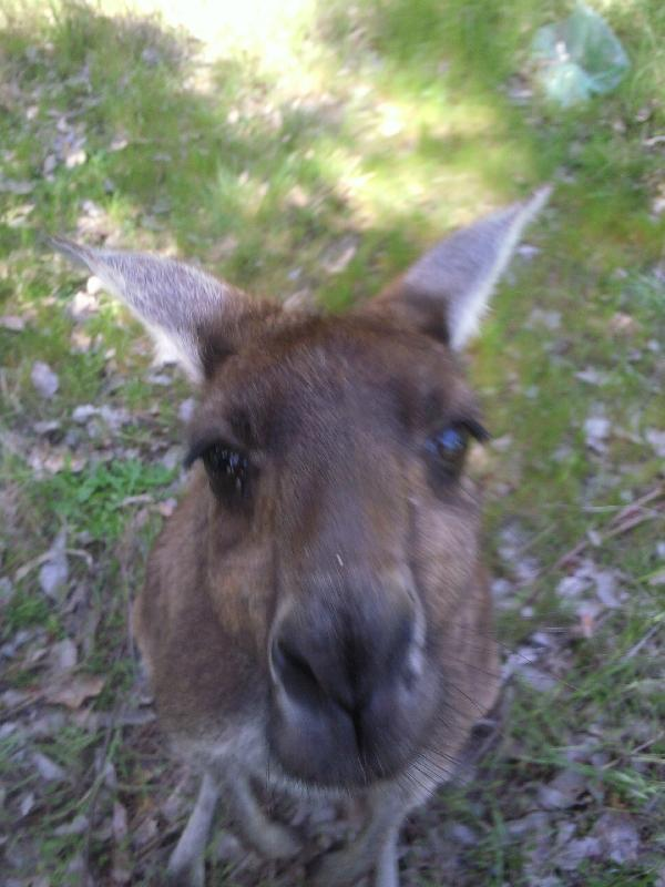 Eye to eye, Dunsborough Australia