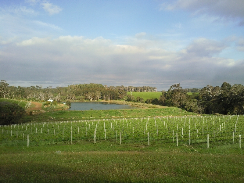 The Vineyard, Australia