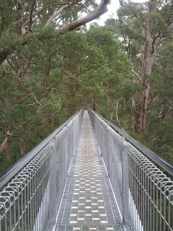 Tree Top Walk, Walpole Australia