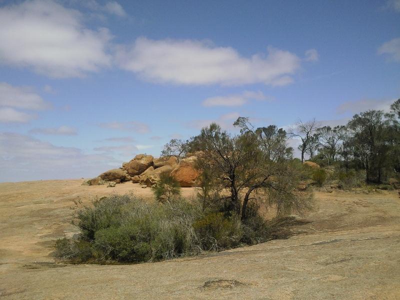 Vegetation on Wave Rock, Australia