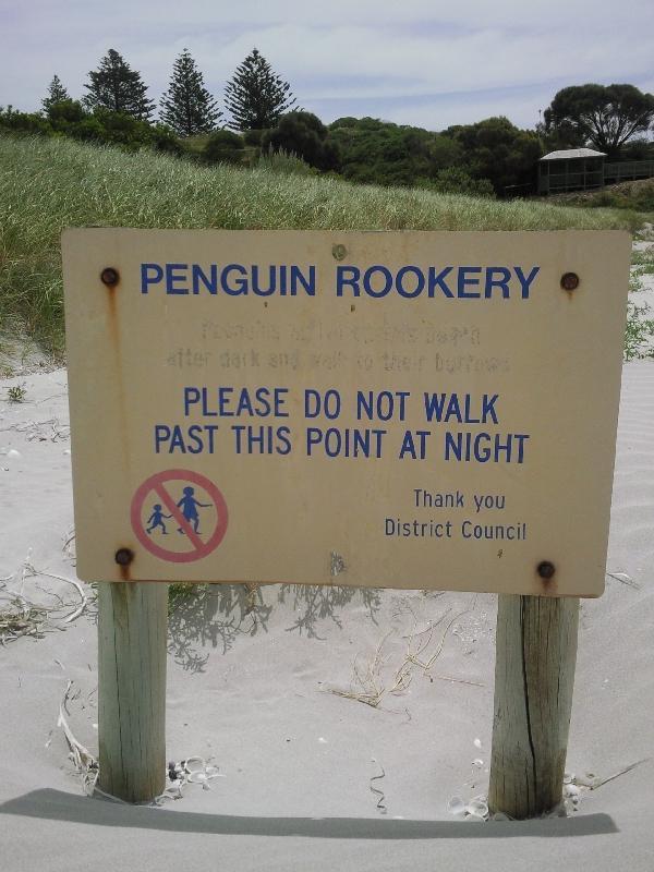 Penguin rookery Penneshaw, Australia