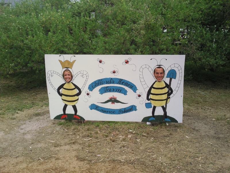 Cute bees, Kangaroo Island Australia