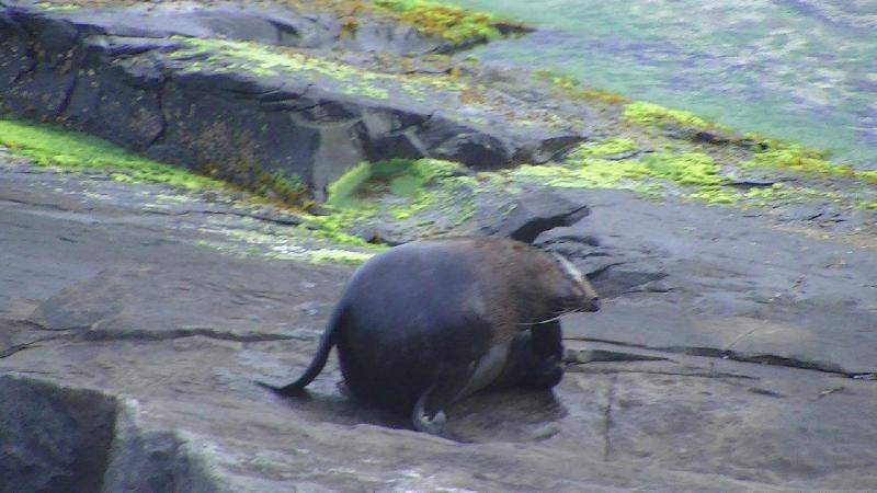Seal shot, Kangaroo Island Australia