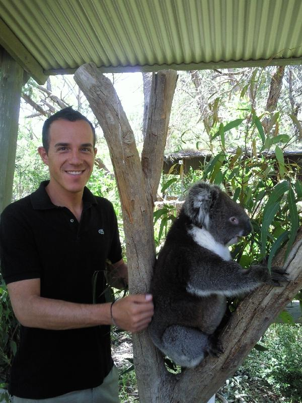 Koala shoot, Cleland Hills Australia