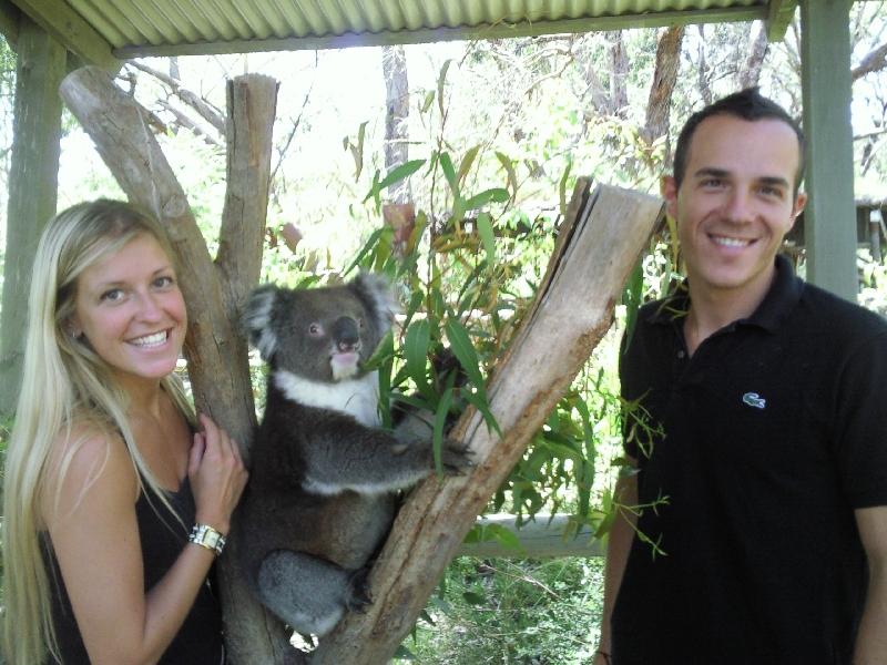 Koala time, Cleland Hills Australia