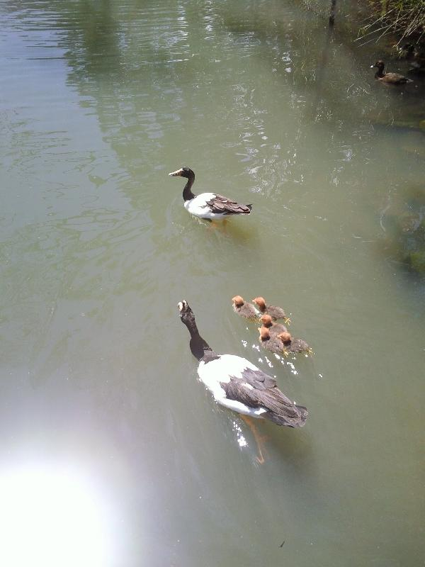 Chicks!, Australia