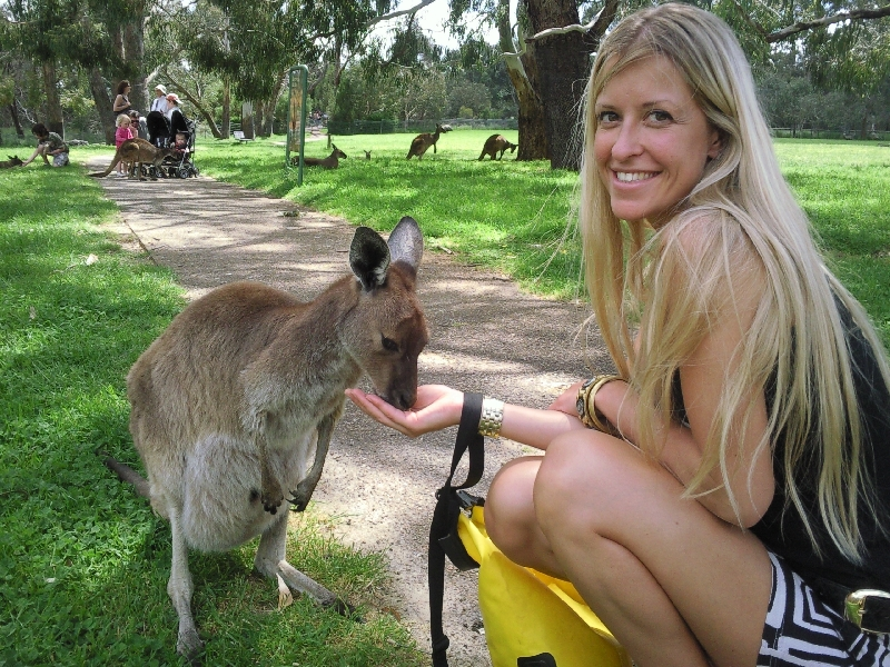 Feeding the roos, Cleland Hills Australia