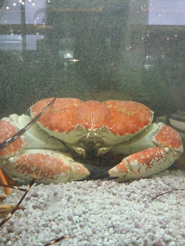 Giant Crab @ Casino, Melbourne Australia