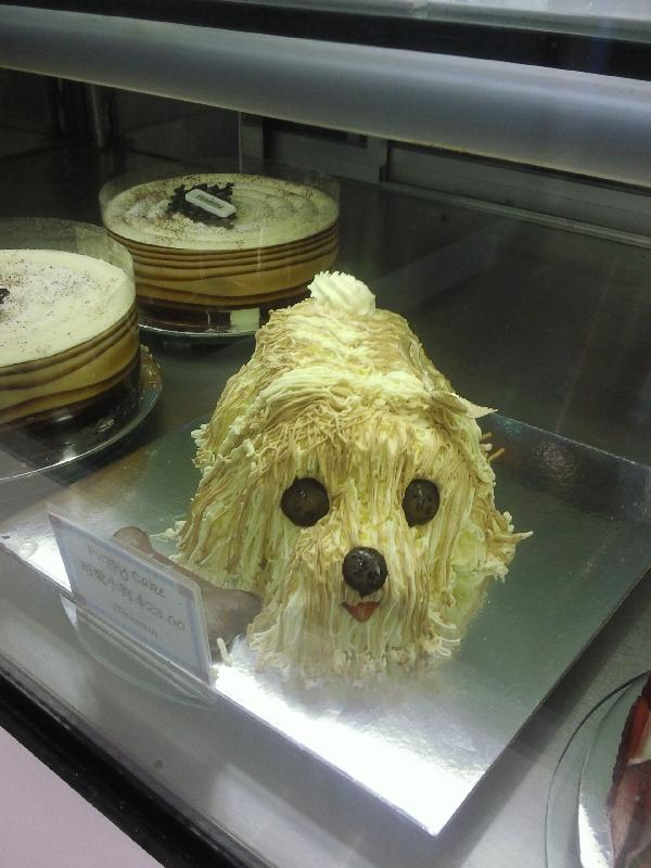 Cutest dog pie!, Australia