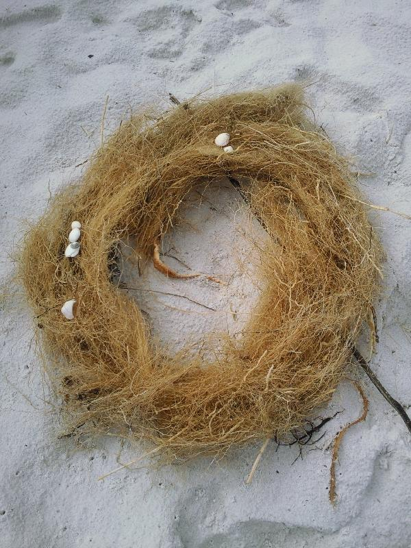 Birds nest at Binnalong Beach, Tasmania, Australia