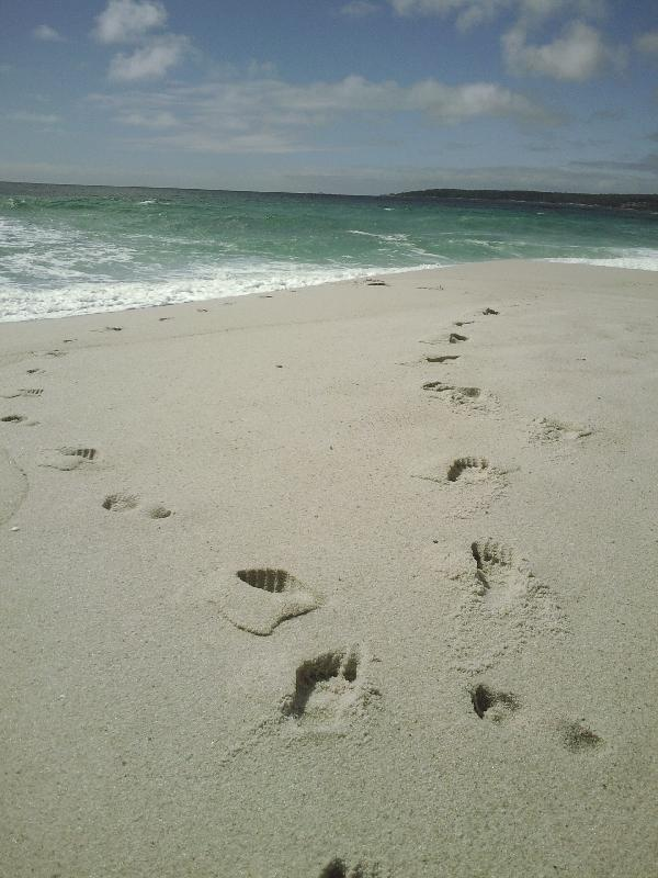Foot prints at Swimcart beach, Bay of Fires Australia