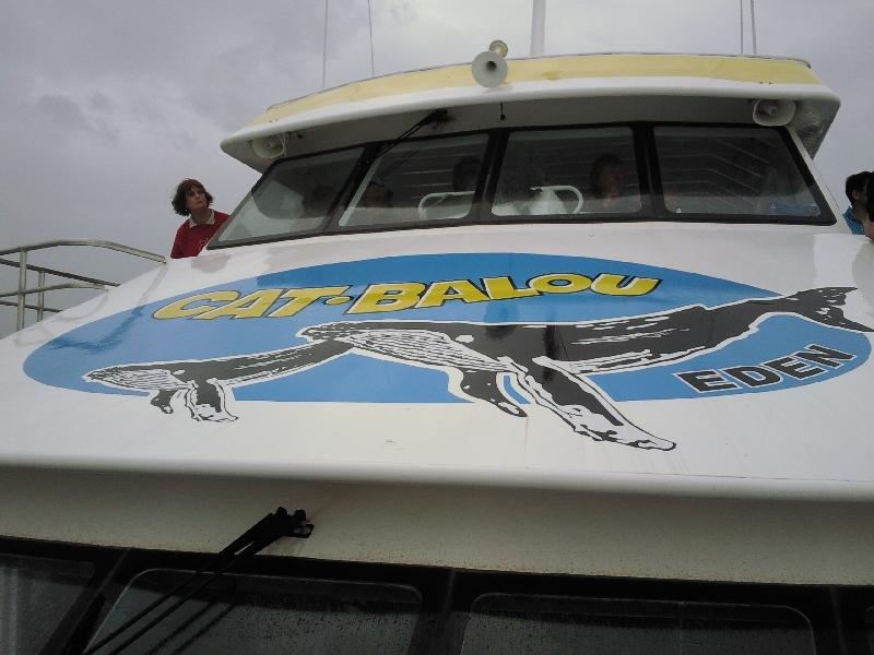 Cat Balou Whale Spotting Cruise, Eden Australia