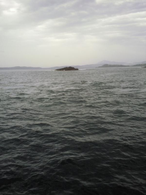 Whale watching Eden, Eden Australia