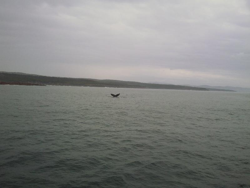 Whale Tail!, Eden Australia