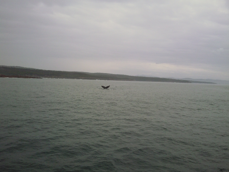 Whale Tail!, Australia