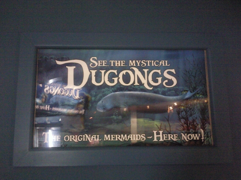 Photo Photos of the Dugongs at the Sydney Aquarium become