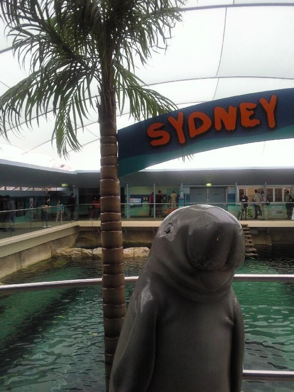 Photo Photos of the Dugongs at the Sydney Aquarium Australia