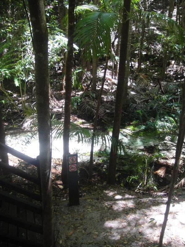 Wanggoolba Creek Fraser Island, Hervey Bay Australia