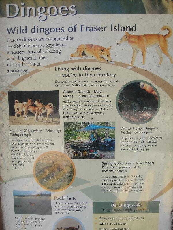 Dingo warning signs on Fraser Island, Australia