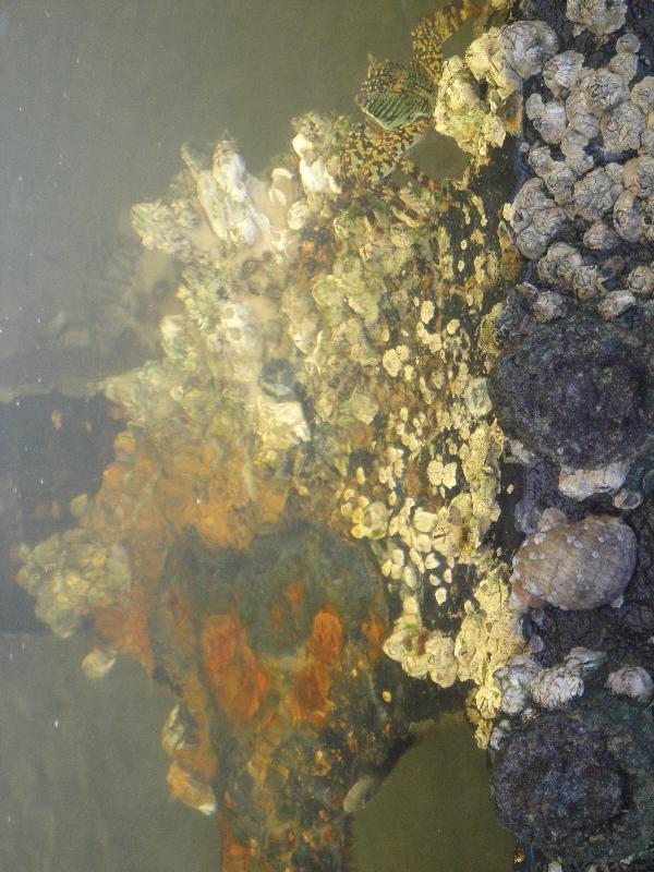 Crabs and fishies around Moheno, Australia
