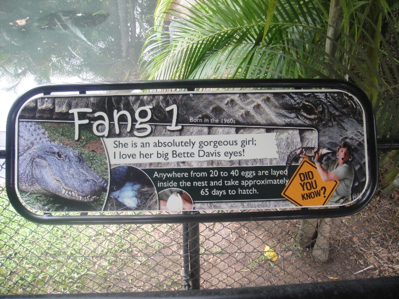 The names of the Australia Zoo Crocodiles, Beerwah Australia