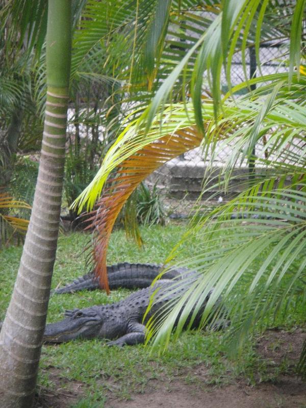 Crocs lagoon paradise, Australia