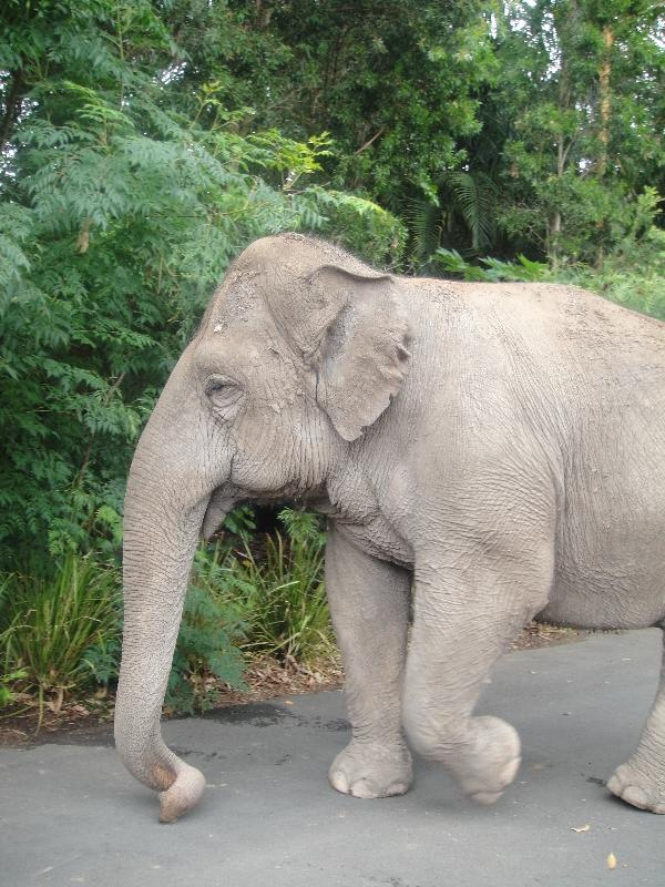 Cute elephants at the Beerwah Zoo, Australia
