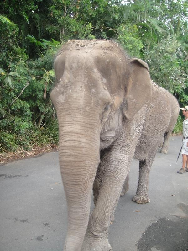 Elephant at the Steve Irwin Zoo, Beerwah Australia
