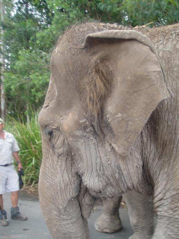 Elephants holding hand in Beerwah, Australia