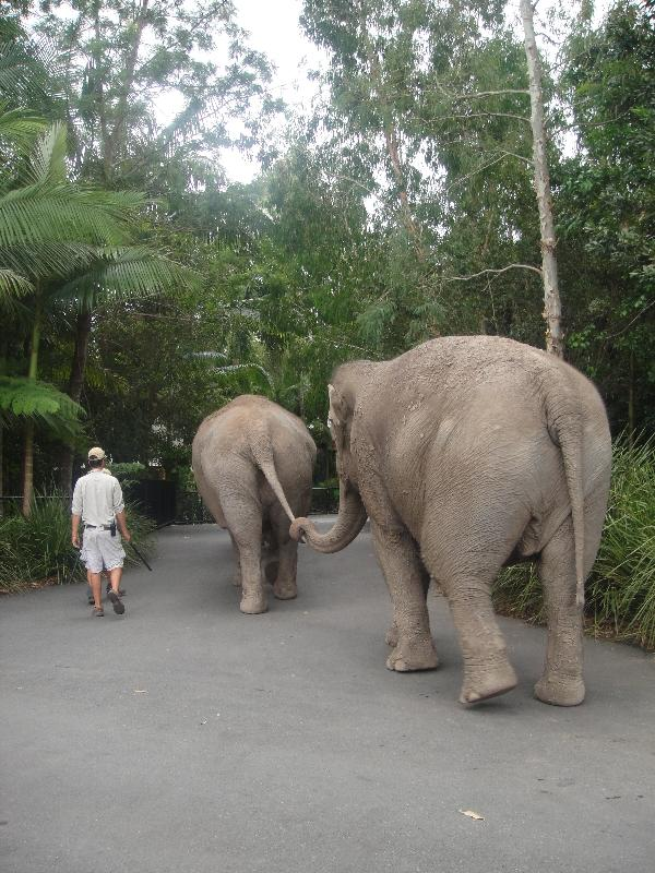 Elephants holding hands, Australia