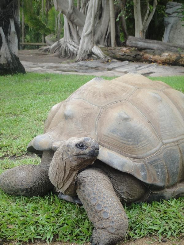 Steve Irwins giant turtle paradise, Australia