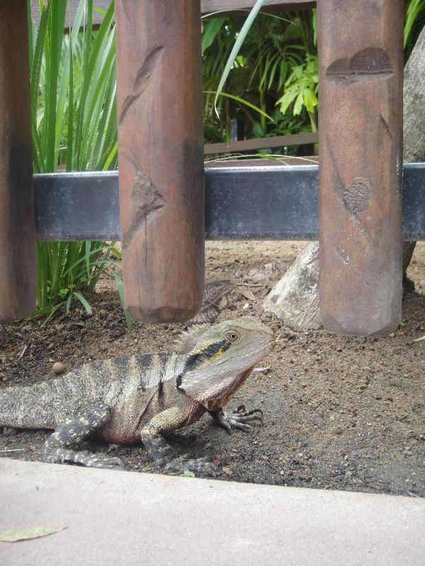 The Steve Irwin Australia Zoo in Beerwah, Queensland Photographs