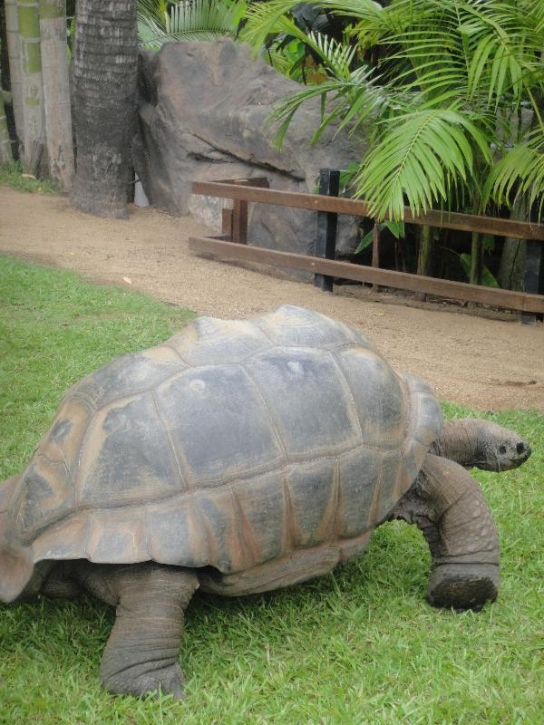 Turtle Garden in Beerwah, Australia