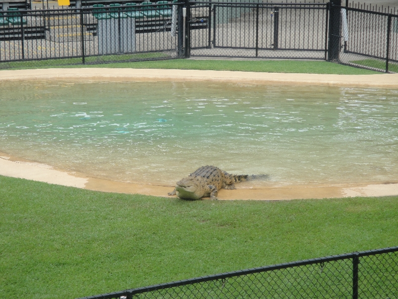 Crocodile feeding at the Crocoseum, Beerwah Australia