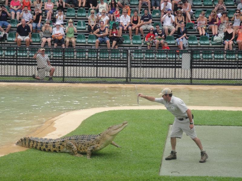 Crocodile hand feeding @ Australia Zoo, Australia
