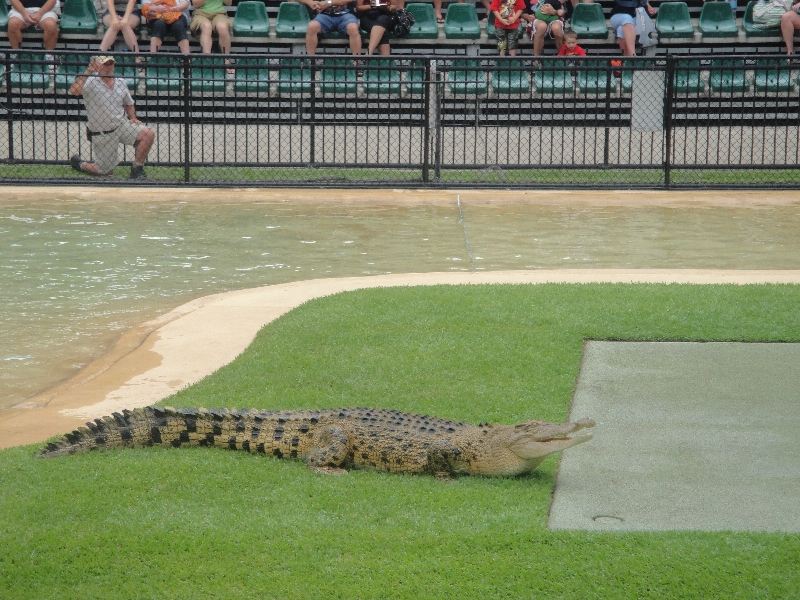 Feeding the crocs at the Australia Zoo, Australia
