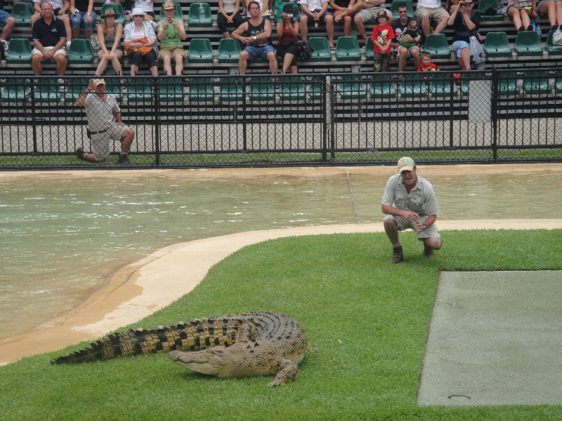 Crocodile feeding time at the zoo , Australia