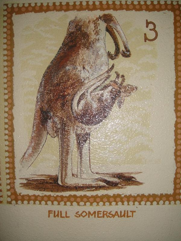 Joey Kangaroo getting in mummy's pouch, Australia