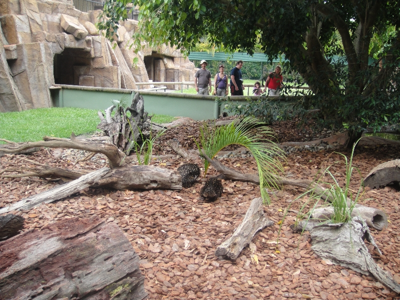 The Steve Irwin Australia Zoo in Beerwah, Queensland Blog