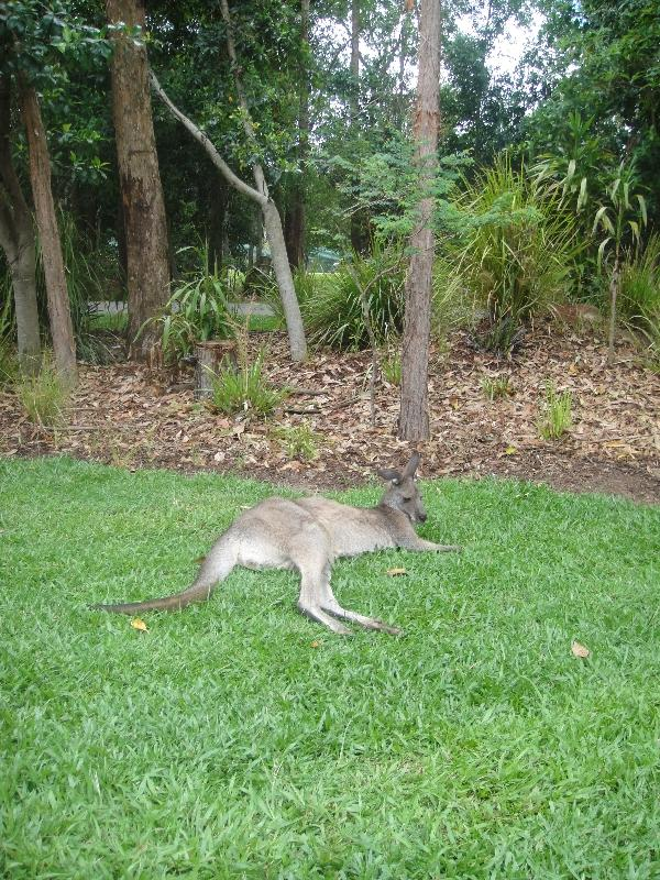 The Steve Irwin Australia Zoo in Beerwah, Queensland Trip Adventure