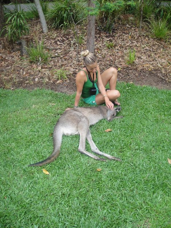 The Steve Irwin Australia Zoo in Beerwah, Queensland Album Pictures