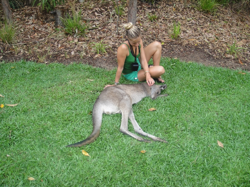 The Steve Irwin Australia Zoo in Beerwah, Queensland Blog Experience