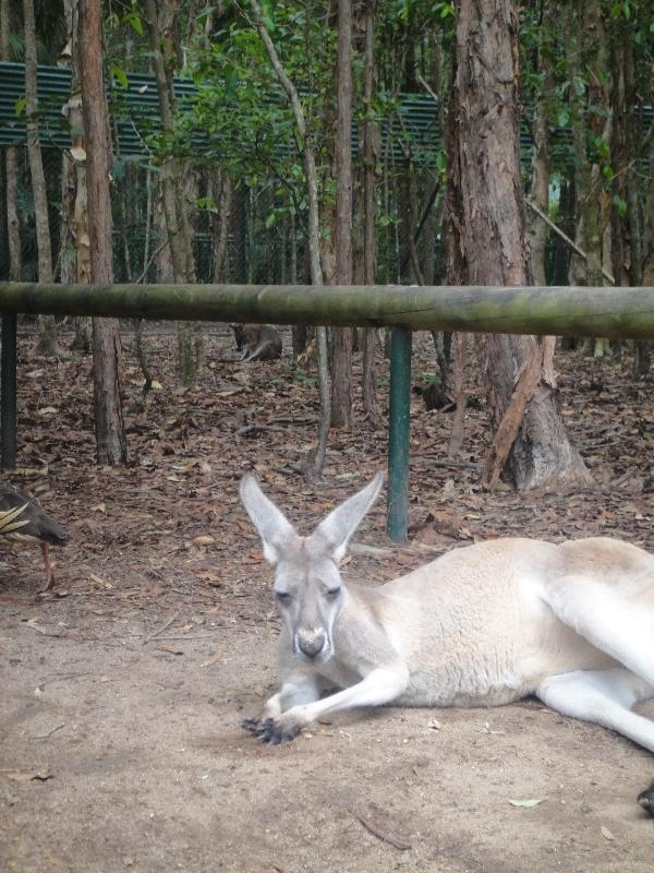 The Steve Irwin Australia Zoo in Beerwah, Queensland Album