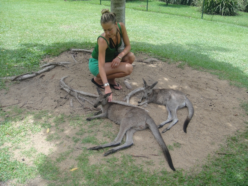 The Steve Irwin Australia Zoo in Beerwah, Queensland Album Photographs